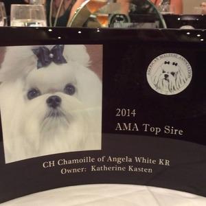 AMA Award